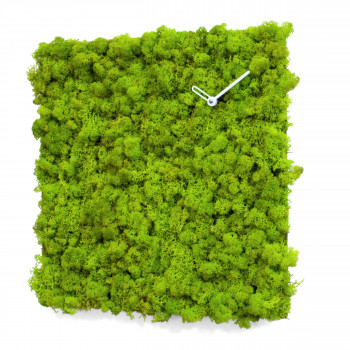 Progetti Orologio da parete in lichene naturale per interni piccolo Clock_Circle Verde    021770